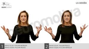 Neuromotiva vinculación hemisferios arana