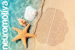 Despierta tu cerebro este verano